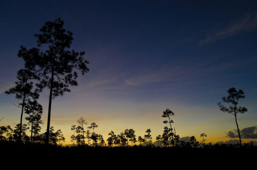 Sonnenaufgang in den Everglades
