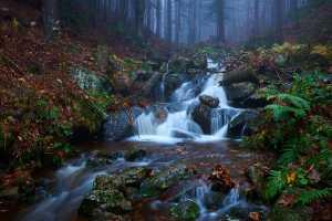 Nebel im Bayerischen Wald