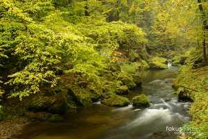 Herbst im Elbsandsteingebirge