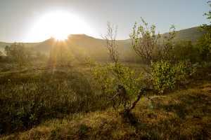 Norwegisches Hochmoor