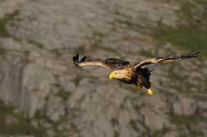 Greifvögel & Eulen
