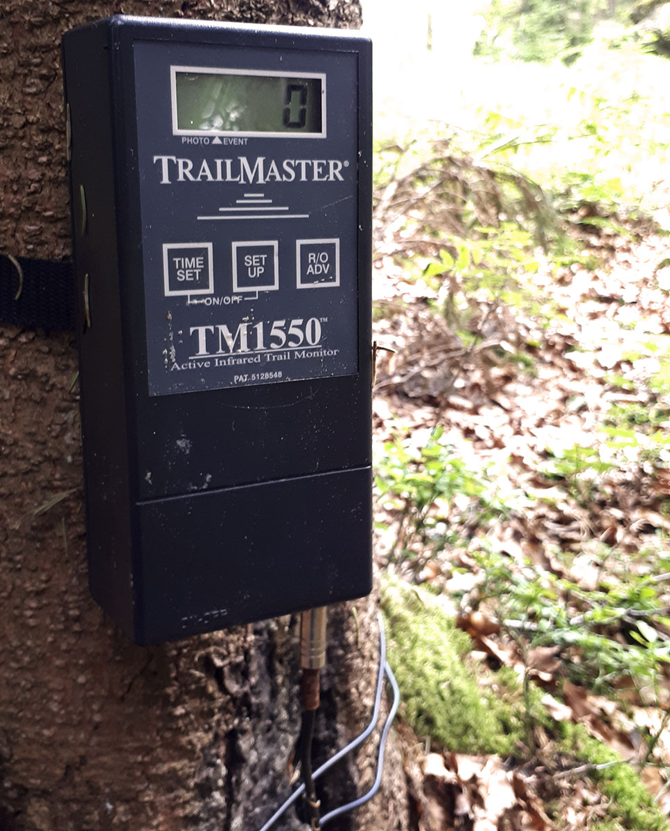 Trailmaster TM1550 PS