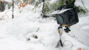 DIY DSLR Cameratrap in the snow
