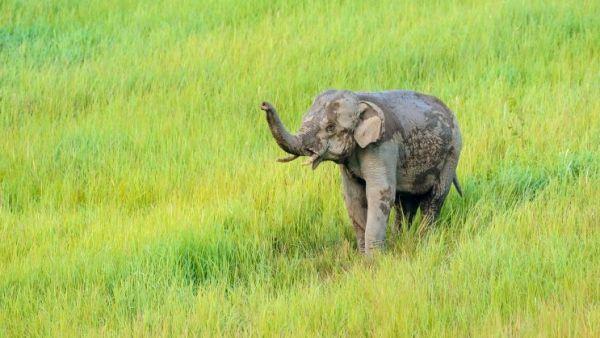 Naturfoto-Urlaub in Thailand